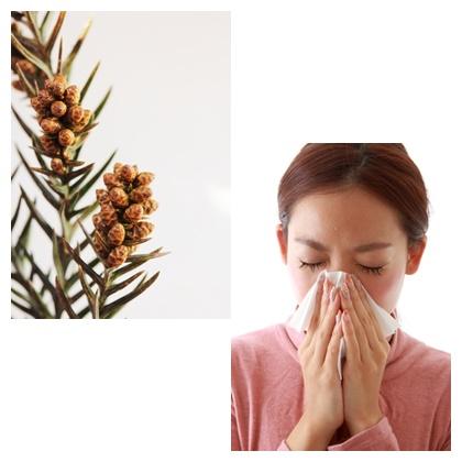 中野区野方の鍼灸院 花粉症